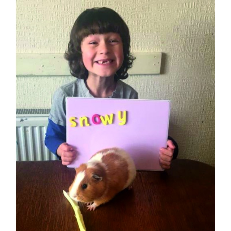 Children love them. Guinea-pig not supplied